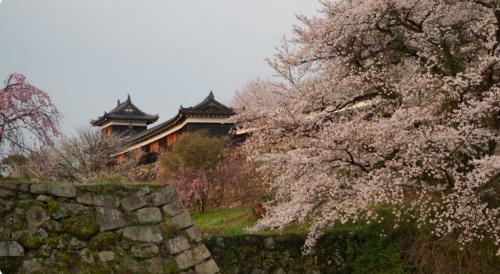 忍ジャニ参上!未来への戦いのロケ地(聖地):郡山城跡
