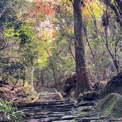 羅生門のロケ地(聖地):春日山原始林(奈良)